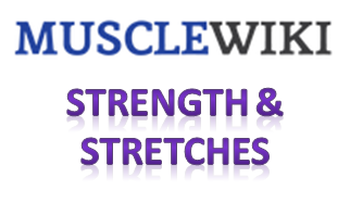 wiki muscle strength stretch